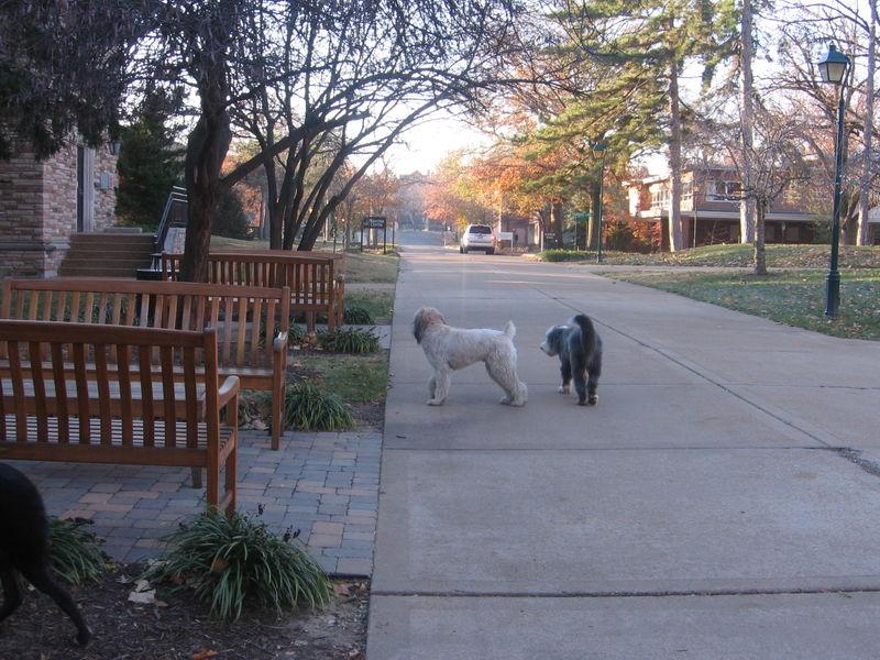 Dog walk 003
