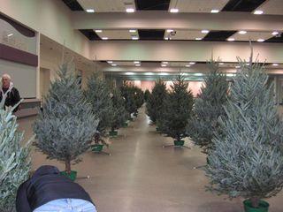 Trees 008