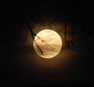Mooncrop