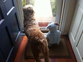 Dogbuddy