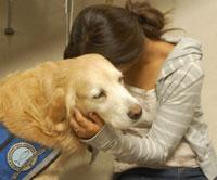 Comfortdogs2