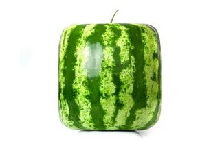 Melonmold2