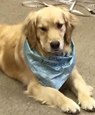 Comfortdog6