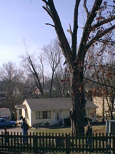Treeprep